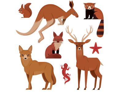 Red Animals science childrens illustration kangaroo red panda nature animals illustration