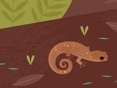 Arboreal Salamander science california nature wildlife amphibians salamander animals illustration