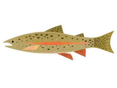 Rainbow Trout trout fishing icon spot illustration animal illustration science wildlife nature ocean fish animals illustration