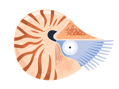 Nautilus vector icon science nature wildlife nautilus animals illustration ocean aquarium