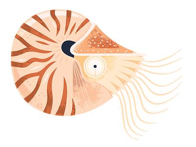Nautilus nautilus icon spot illustration animal illustration science wildlife nature ocean fish animals illustration