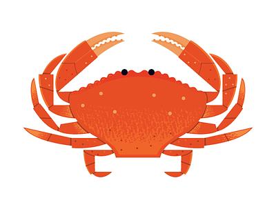 Dungeness Crab science adobe illustrator vector seafood food icon icon food crab aquarium ocean wildlife illustration