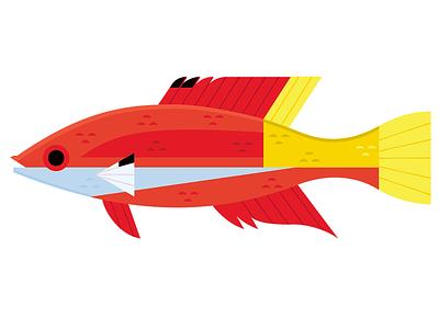 Cuban Hogfish icon design tropical fish aquarium fish fish icon icon aquarium fish animals