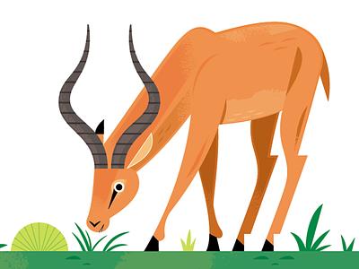 Impala african savanna savanna antelope african animals africa science nature wildlife animals illustration