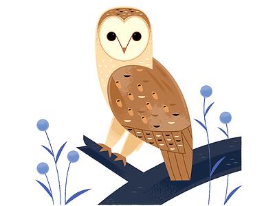 Barn Owl animals nocturnal birding nature wildlife birds owl spot illustration illustration
