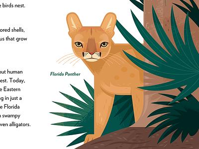 Florida Panther adobe illustrator vector everglades national parks puma illustrated animals nature wildlife animals illustration