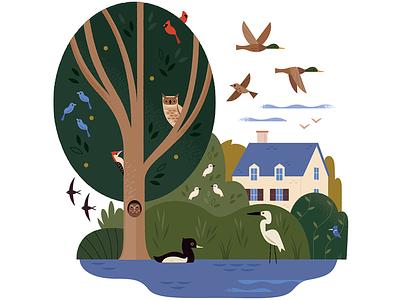 Birds All Around wetlands ducks owl birding birds editorial illustration vector wildlife nature design animals illustration