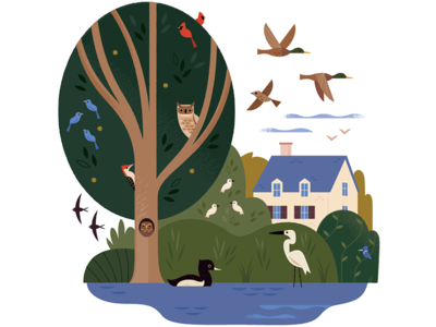 Birds All Around