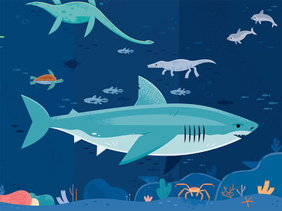 Megalodon history science wildlife nature design illustration animals prehistoric shark ocean