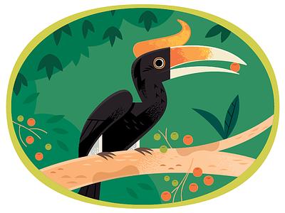 Hornbill jungle birds vector wildlife nature animals illustration