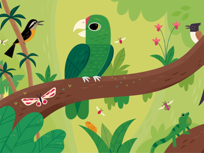 Iguaca childrens books kids lit character design birds vector wildlife nature animals illustration