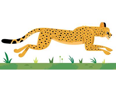Cheetah childrens book childrens kids lit african animals africa cheetah vector wildlife nature design animals illustration