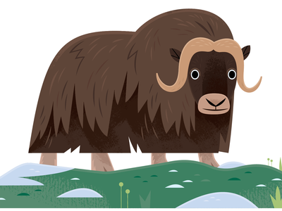 Musk Ox science vector wildlife nature design animals illustration