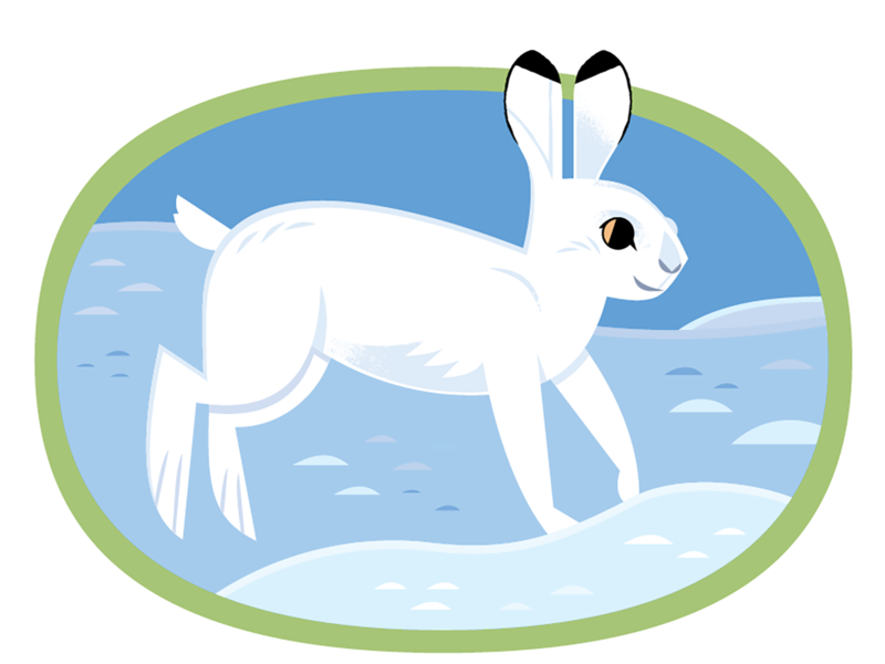Snowshoe Hare kidlitart childrens illustration rabbit bunny graphic design vector wildlife nature design animals illustration