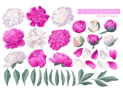 White and Pink Peonies set