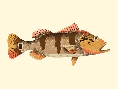 Tucunare design riverside tucuna brasil water vector ilustrator grain texture grain tropical brazilian amazon brazil fishing river fish peixe tucunare