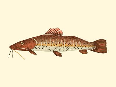 Pintado fishes vector illustration brazil brasil brazilian tropical fishing rod eat water underwater grain texture grain river amazon pintado fishing fish