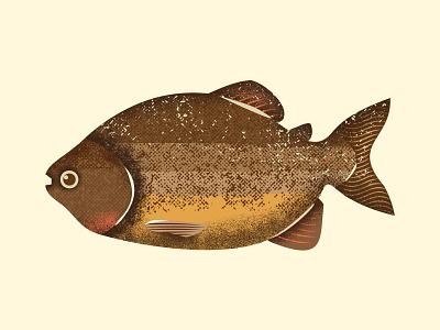 Pacu peixe brasil jungle tropical illustration serie vector design grain texture grains fishes brazilian river fishing amazon brazi pacu fish