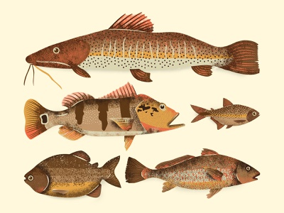 River Fish water summer cool design funny cool brazil tropical illustration illustrator cc vector grain texture grain river peixe fish pacu tucunare lambari corvina