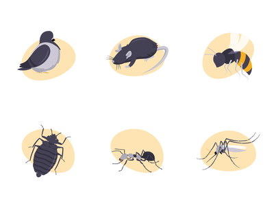 Some insects.