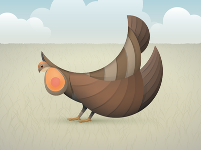 Prairie Chicken illustration chicken vector