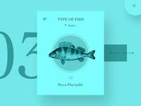 Type Of Fish