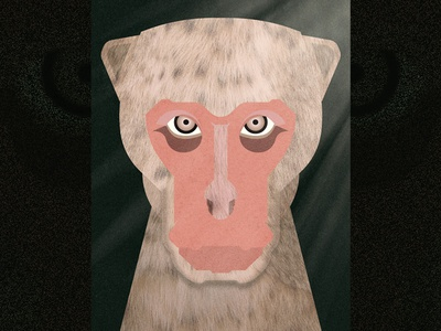 Japanese macaque japanese macaque eyes wood jungle portrait face animal monkey