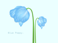Blue Poppy Flower