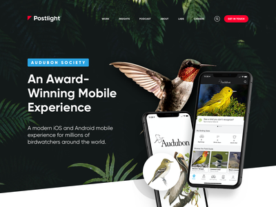 Postlight - Audubon Case Study ui mobile app mobile case study portfolio audubon birds nature web design ui design