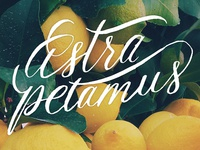 Astra Petamus logo