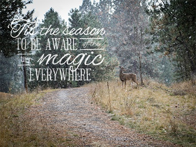 Winter Magic deer magic typography photography quote snow path road trees forest nature