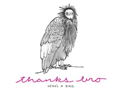 Condor bird sketch illustration