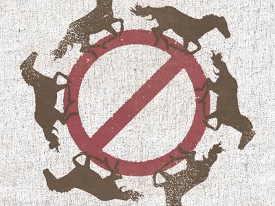 Don't Horse Around
