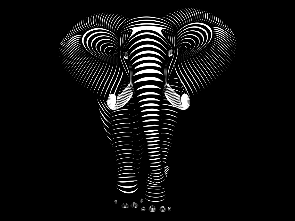 Elephant lines instagram 01 wide 01