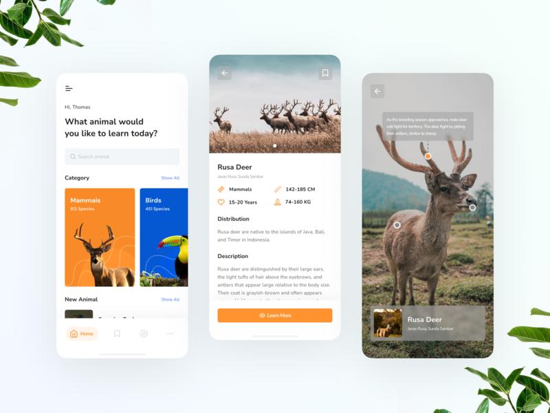 Mobile Exploration - Anipedia ui design orange ux ui portfolio wild education ios mobile app design clean animal app