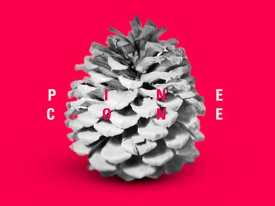 Pine Cone pine cone random nature bright typography pink
