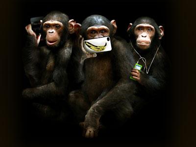 speak, see, hear no evil chimpanzee chimp monkey evil technology iphone ipod