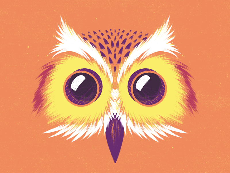 Camera Owl film cinema cine camera grain wacom texture animal búho owl illustration