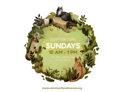 Community Cat Rescue nonprofit cat photoshop illustration