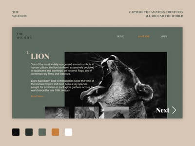 TheWildlife Ui design   Simple Web Design