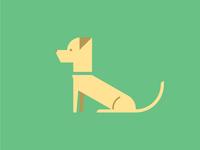 Olive (part 1) cute puppy maltese golden retriever