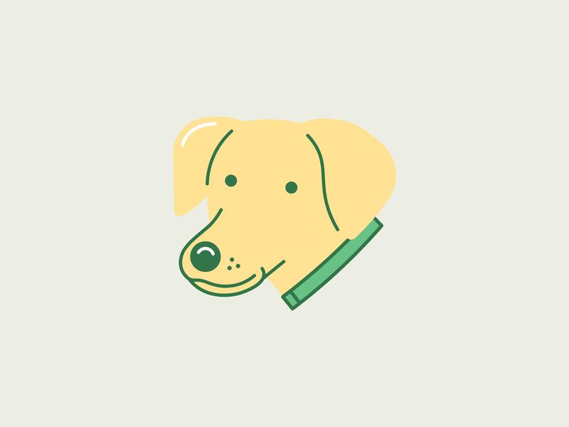 Olive (part 2) cute puppy maltese golden retriever dog