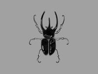 Beetle Illustration
