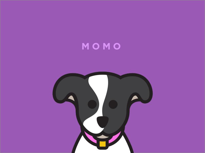 Momo momo vector illustration dog
