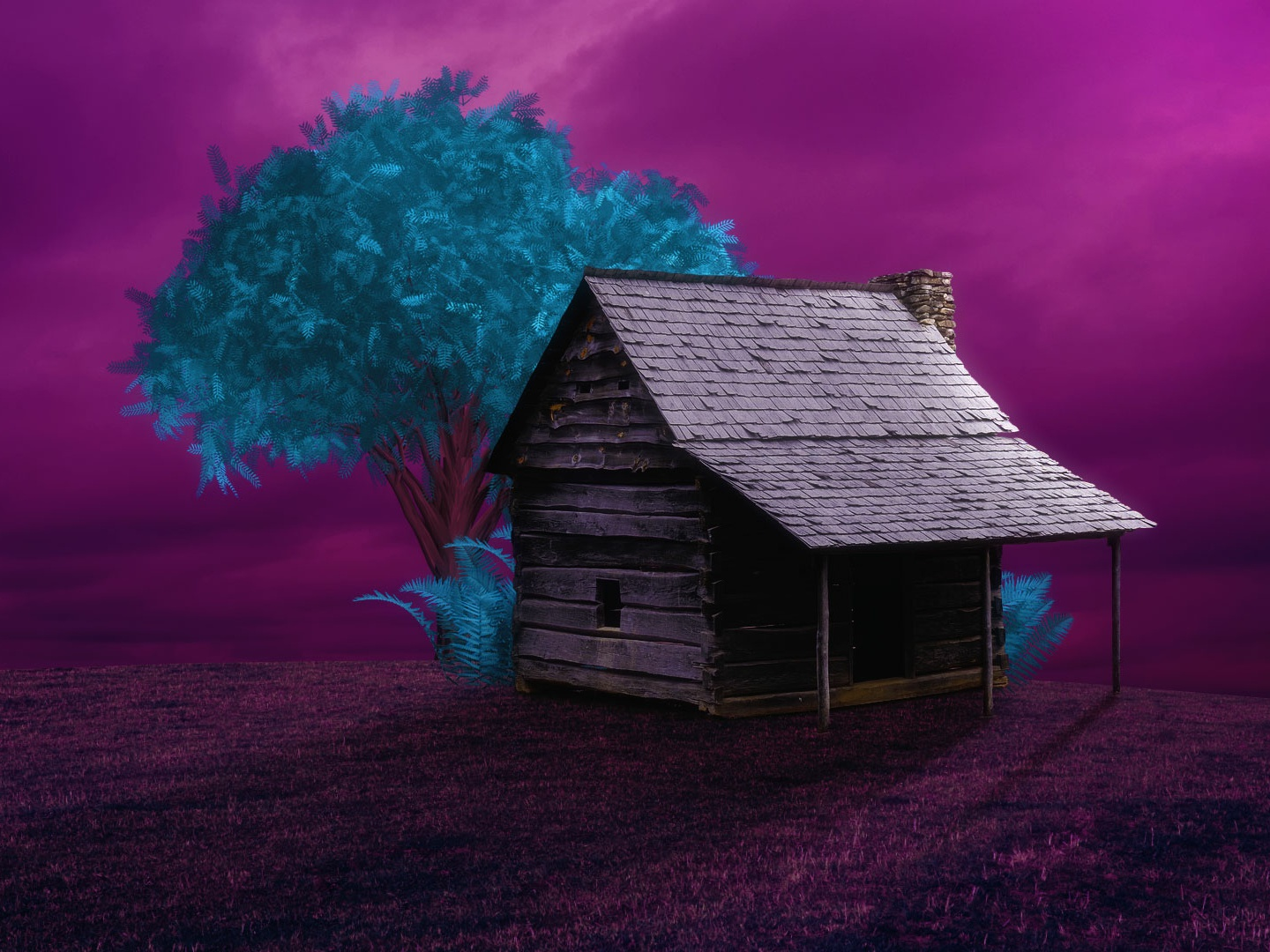 Pothead's Wonderland image manipulation art purple colors adobe photoshop