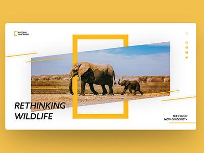 National Geographic Landing Page wildlife graphic design elephant animal natgeo national geographic design figma website concept website webdesign figmadesign