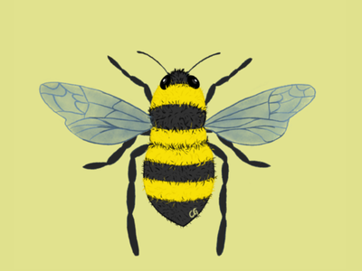 To bee or not to be? fly black yellow bug graphisme claireguyot bee nature digitalart art illustration procreate