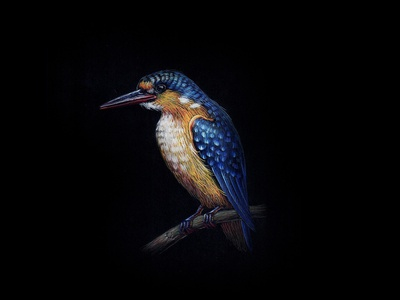 KingFisher 05