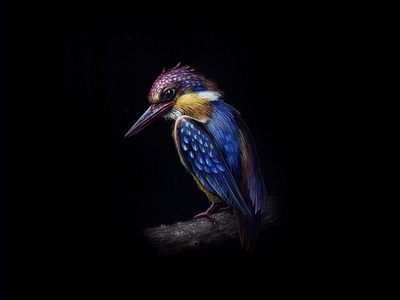KingFisher 06