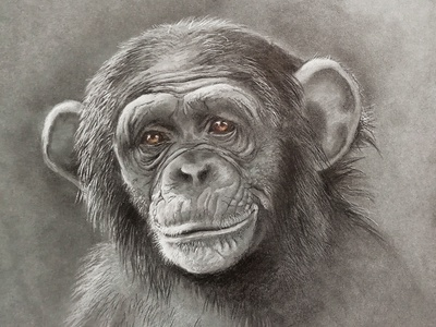 Monkey s3 4